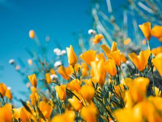 A Hopeful Spring