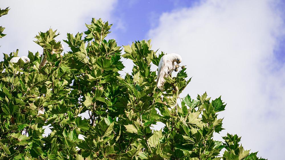 ענף עץ עבות