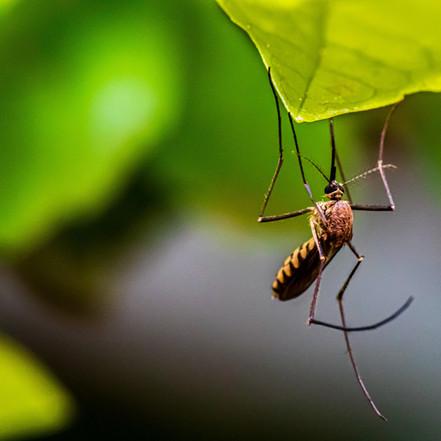 Il caffè per combattere le zanzare e gli insetti