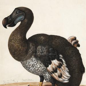 Šta se desilo sa pticom dodo?