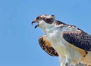 Bird Watching in Pagosa Springs