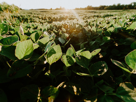 November Soybean 22 Year Highs and Lows