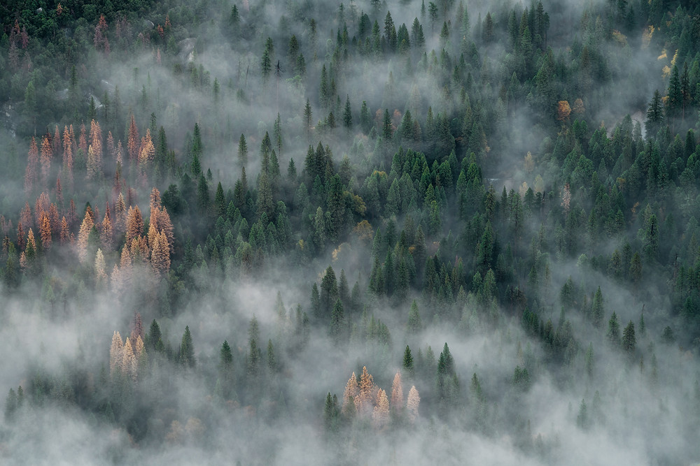An aerial view of a forest covered in fog.