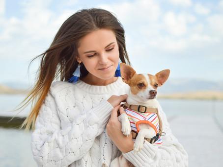 Sejarah, Karakteristik, dan 6 Fakta Unik Anjing Chihuahua