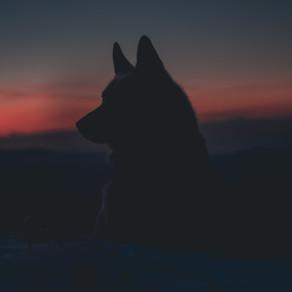 """Where the humans howl"" by Muhammad Nasrullah Khan"