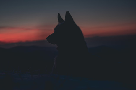 The Lone Wolf Archetype and the Illusion of Independence
