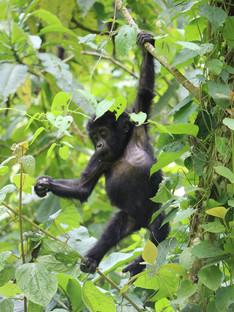 August Week 1: Boston student given free £3,000 piano, gorilla baby boom in Uganda