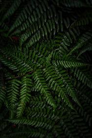 Tropical Moody Plant | Image by Massimiliano Morosinotto
