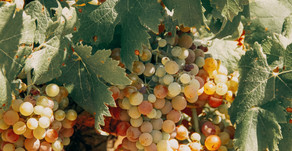Santa Digna Non-alcoholic Wines and what they stand for................