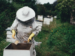 August Beekeeping Tips