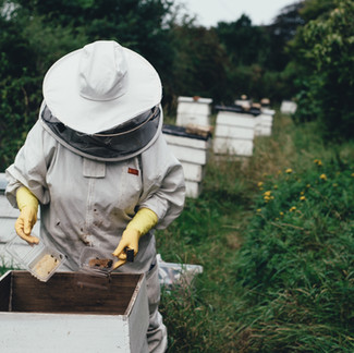 Can I Safely Remove Bees from My Backyard?