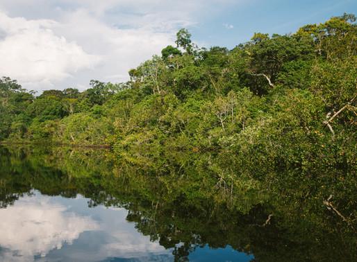 Pelo segundo ano, Amazônia será tema de Bolsonaro em discurso na ONU