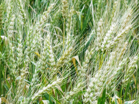 Los beneficios de la agroforestería ecológica (Parte II)