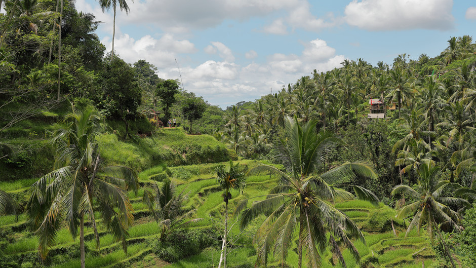 Indonesia reduced the rate of deforestation by 75% in 2020