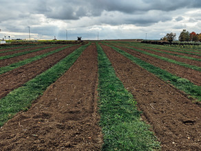 Cum alegem corect practicile agricole durabile: agricultura conservativă sau cea regenerativă?
