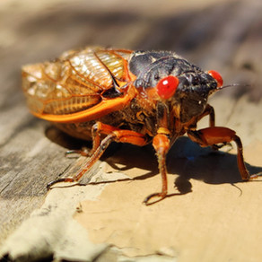 of fat Dogs & amorous insects by Jeremy Nathan Marks