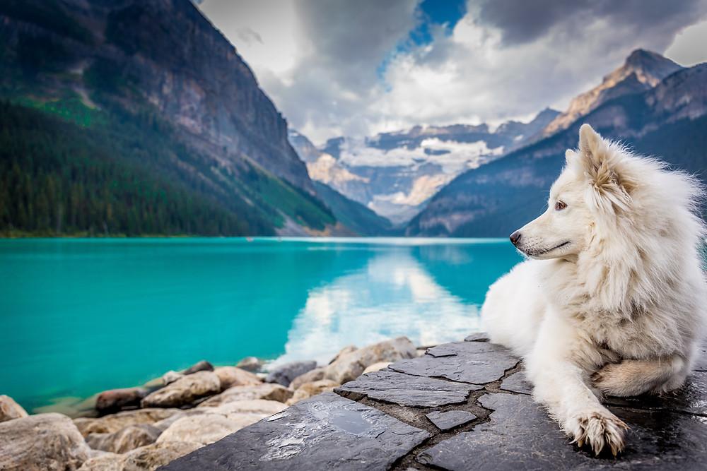 Dog nature