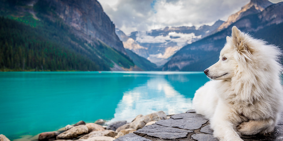 Monday Meditation: Animal Spirit Guides