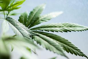 Denali Healthcare Medical Cannabis