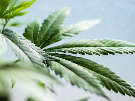 How to Tell the Difference Between Male and Female Marijuana Plants