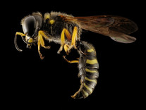 Tips & Tricks: Stinging Insects