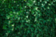 Plant photosynthesis origen air