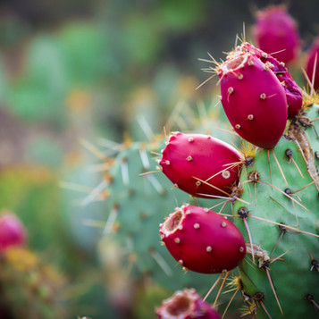 Prickly Pear Grilled Chicken Breast