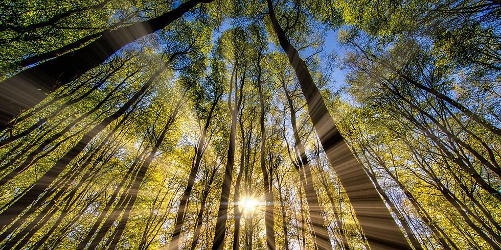 Radiating Rays - Group Healing June 2020 (FOC)