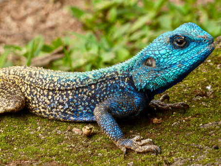 HOW DEFENSE COUNSEL CAN PREPARE THEIR WITNESS TO SLAY THE REPTILE AT DEPOSITION