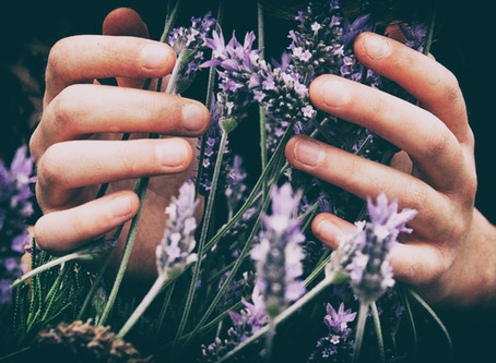 Stress Away with Lavender