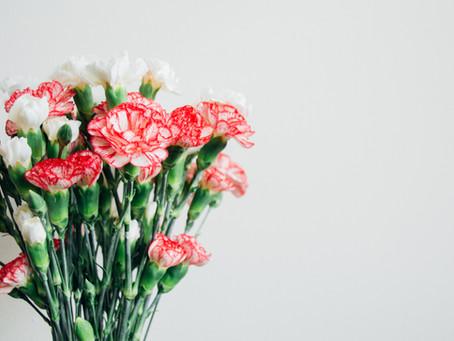 הפרח רשמי לחודש ינואר (משמעות וסמליות)