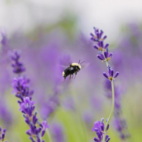 Best Pollinator Flowers to Add to Your Garden
