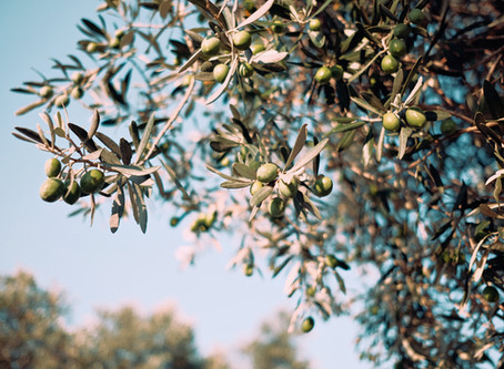A Short Guide To Aromatics