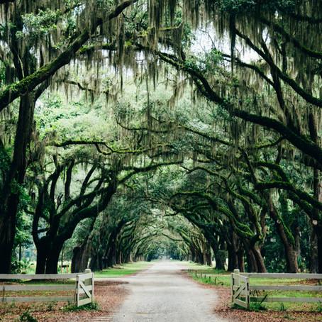 25 Places You Can't Miss if Visiting Savannah, GA