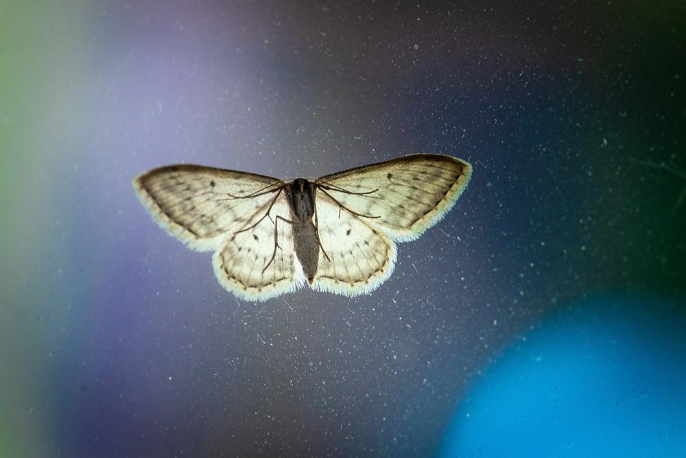 moth seeking the light
