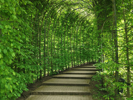 The Garden of Gethsemane the Road Back to Eden