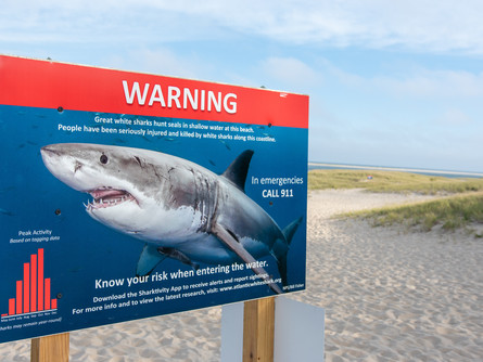 Shark Shockers: Great White Sharks