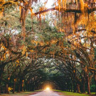 Ep. 205 | Savannah: Midnight in the Garden of Applesauce & Horsefeathers
