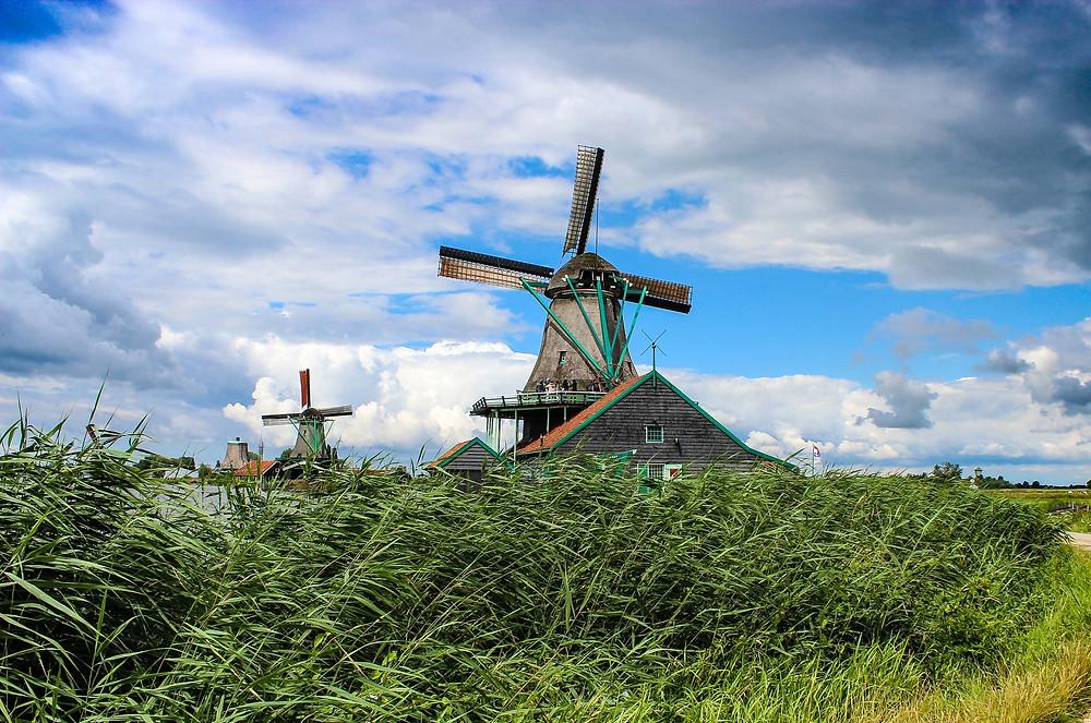 Green grass & windmills