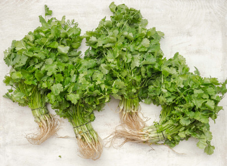 Cilantro's Health Benefits