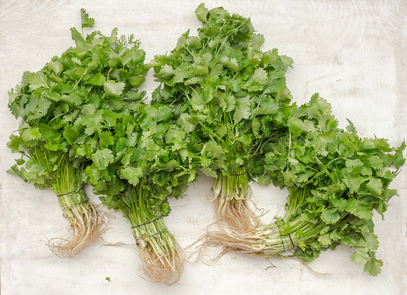 Fresh Coriander (per item)