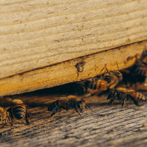 How To Detect Pests In Your Home