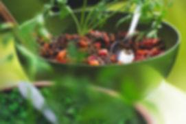 סלט עדשים