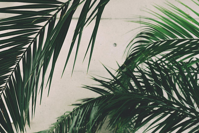 Palmių ir kitų egzotinių augalų sodinimas