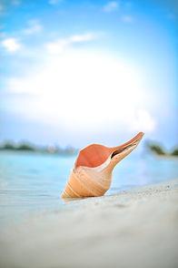 Image by Rayyu Maldives photographer