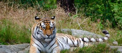 'Tiger King's Carole Baskin sued for defamation