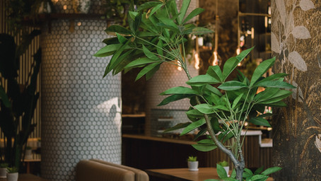 Sodexo Lund använder realtidsmätning i en stor restaurang