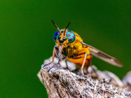 What is Natural Pest Control?
