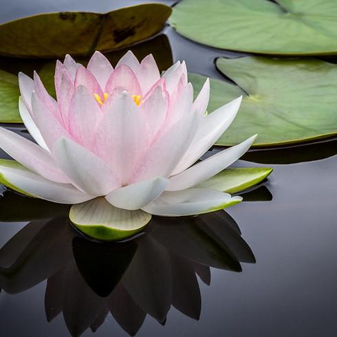 Garden Meditation & July Gathering