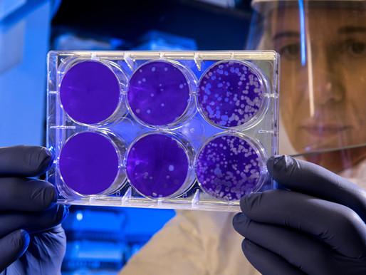 Covid-19: Estudo mostra que anticorpos podem durar até 12 meses após infecção